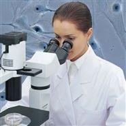 奥林巴斯倒置显微镜CKX31北京销售点