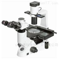 NIB-100显微镜
