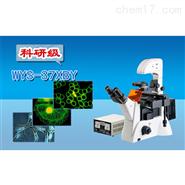 三目倒置熒光顯微鏡