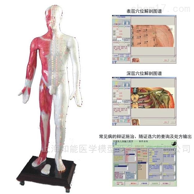 西安针灸穴位发光模型
