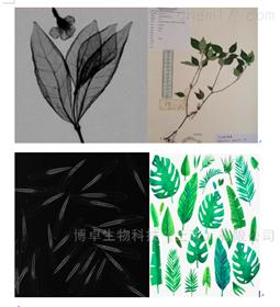 xpert20植物标本及种子果实x光无损检测系统
