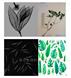 植物标本及种子果实x光无损检测系统