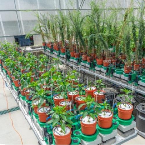 以色列Plant-DiTech根系生理表型测量系统