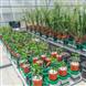 以色列Plant-DiTech植物表型分析平台
