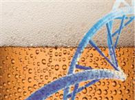 48 testsMilenia--Lactobacillus/Pediococcus-Screen