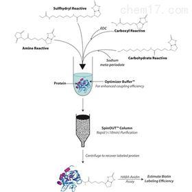 BS-04HOOK-NHS-SS-Biotin 生物素标记试剂盒