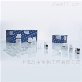 质粒中提试剂盒