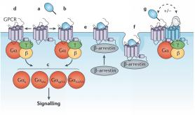 珀金埃尔默推出GPCR TR-FRET 结合试剂盒以及b-Arrestin检测试剂盒以加快发现有效疗法