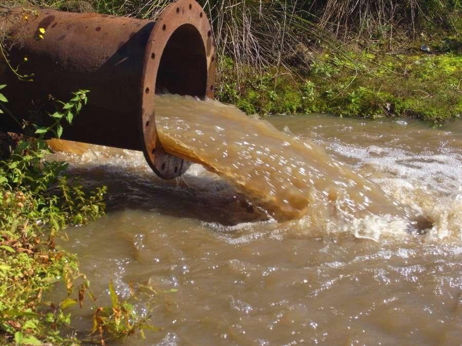 氨氮含量过高的水质